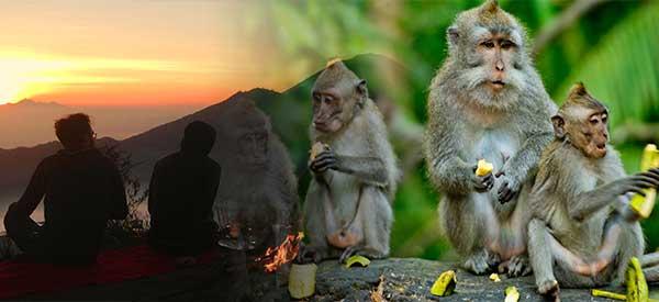 Batur Volcano Trekking and Monkey Forest